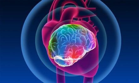 Corazón-Cerebro