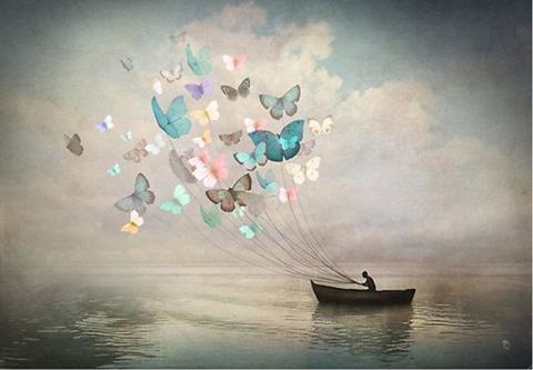 barca y mariposas